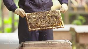 bees are dying what can we do about it cnn
