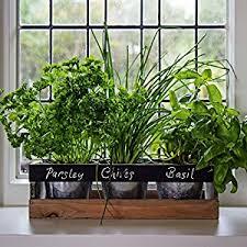 indoor herb garden kit by viridescent wooden windowsill