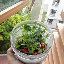mosto terrarium u0027s items for sale on carousell