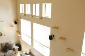 Shelves For Cats by View Topic Cat Chat Please Go To Cat Chat 2 Chicken Smoothie