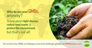 Current Gmo Crops Gmo Answers