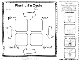 plant life cycle cut and paste activity kindergartenklub com