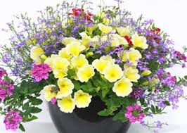 mothers day plants s day plants and precautions tip of the week