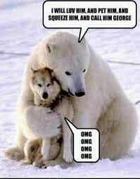 polar bear meme george pet memes comics pinterest bear