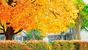 fall color calendar savatree