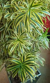 best 25 indoor plants india ideas on pinterest plants indoor