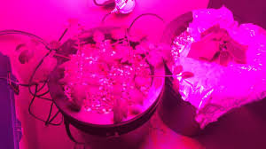indoor hydroponic garden tomato and cucumber with led grow