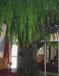 custom cat trees weeping willow tree hollow cat trees by