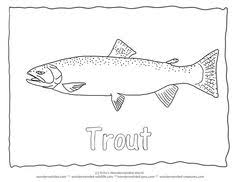 trout coloring pages pictures hp trout wood