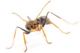 new article navigational knowledge of ants ant visions