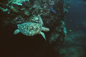 19 000 smuggled sea turtle eggs seized