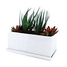 amazon com succulent and herb planter pot with removable tray