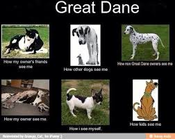 Great Dane Meme - nipper danes about the breed