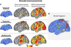 Human Brain Mapping Stepwise Connectivity Of The Modal Cortex Reveals The Multimodal