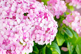 common wedding flowers 3 popular wedding flowers