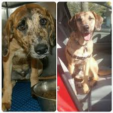 Table Mountain Animal Shelter by 39 Pics Of Happy Rescue Dogs Before And After Photo Gallery