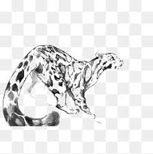 drawing tiger cartoon tiger color watercolor splash png image