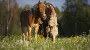 horses stunning pinto horse handsome happy wallpaper