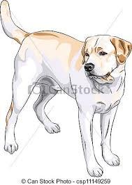 eps vector of vector sketch red gun dog breed golden retriever