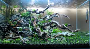 aquascaping layouts with stone and driftwood wood rock a love story aquascaping world forum