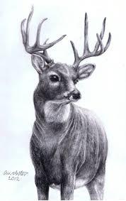 198 best deer sketches images on pinterest deer sketching and