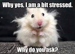 Funny Stress Memes - funny work quotes weight loss journey what stress did work