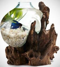 Betta In Vase 6 Amazing Aquariums For Your Home Dog Cat And Other Pet Friendly