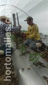 hortomallas trellis netting for plant support