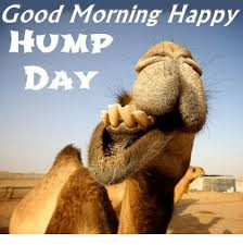 Hump Day Camel Meme - good morning happy hump day hump day meme on me me