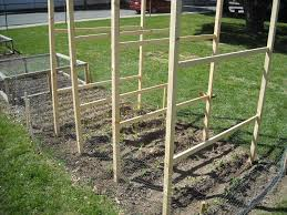 building pea fences the year round harvest