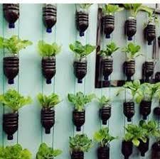 cara membuat cairan hidroponik cara menanam tanaman hidroponik menggunakan botol bekas jual