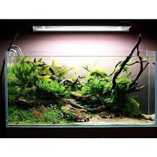 Aquarium Aquascapes Best 25 Aquarium Aquascape Ideas On Pinterest Aquarium Ideas