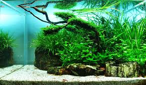 Aquascaping Plants Top 10 Most Beautiful Freshwater Aquariums Of 2012 U2014 Hungarian