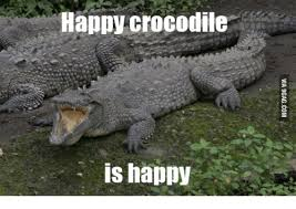 Crocodile Meme - happy crocodile is happy crocodile meme on me me