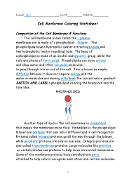 cell membrane coloring worksheet key cell membrane osmosis
