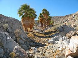 36 best anza borrego desert state park images on pinterest state