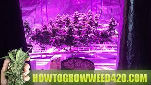 led marijuana grow lights how to grow weed official growing elite marijuana download