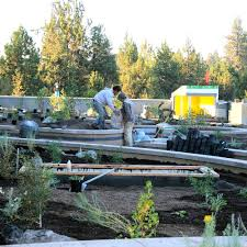 native plant nursery portland oregon projects u2014 wintercreek restoration u0026 nursery