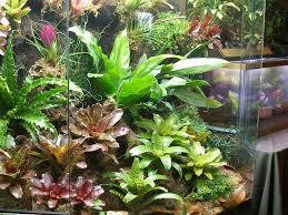 tropical terrarium and vivarium creation u003e u003e amphibian care