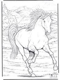 coloriages de chevaux et poneys coloriages enfants biboon