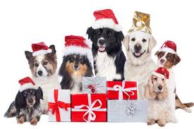 dog christmas merry christmas let the merriment never ends for your pet