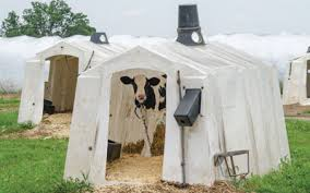 Calf Hutches For Sale Polydome Agricultural Products Available Through Zartman Farms