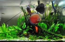 membuat aquascape bening problem yang sering muncul pada aquascape smartf41z