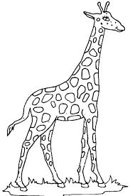 belajar mewarnai gambar hewan jerapah untuk anak