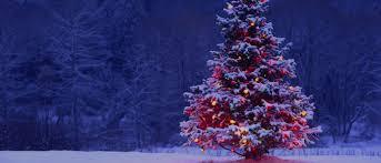 precious memories christmas tree farm llc