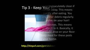 how to get rid of silverfish 5 easy tips youtube