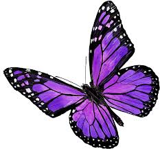 purple butterfly stickers by vikikl redbubble