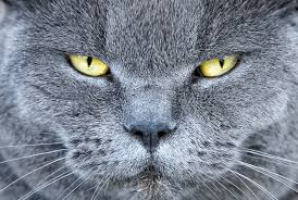 male cat behavior
