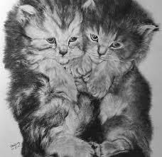 imagenes a lapiz de gatos maravillosos dibujos de gatos hechos a lápiz imágenes taringa