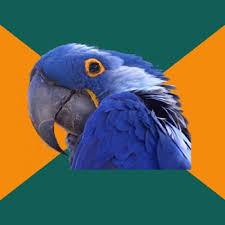 paranoid parrot meme generator imgflip